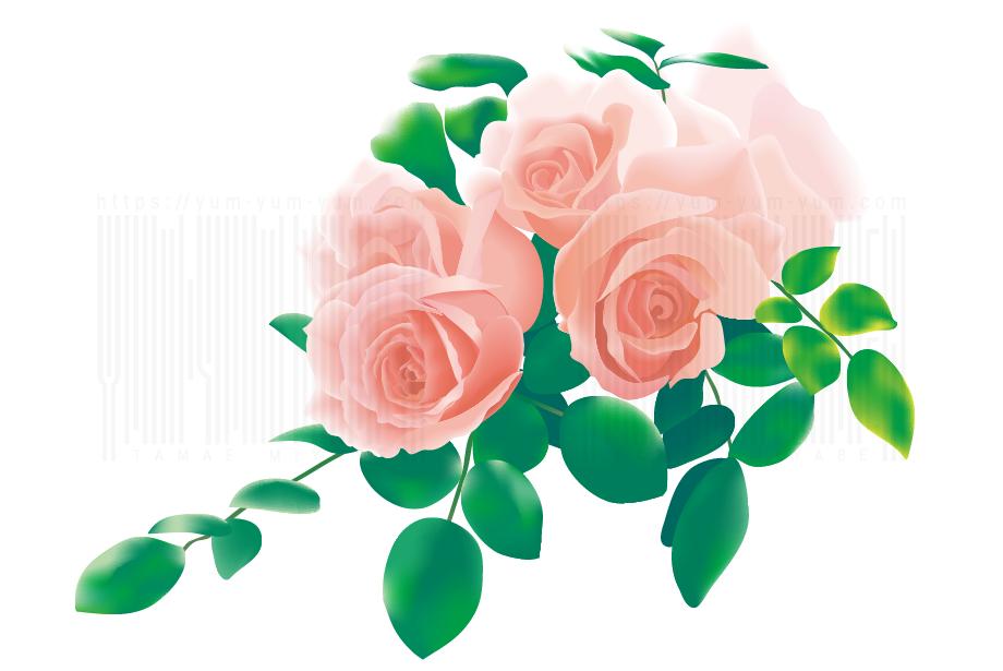 Yum Yum Diner宮部珠江ギャラリー リアル寄り薔薇イラスト